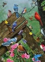 Legpuzzel - 1000 - Natuurvogels