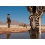 Legpuzzel - 1000 - National Geographic zebras