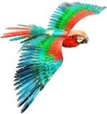 Parrot - Metal Earth
