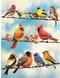 Legpuzzel - 500 - Vogels op een draad