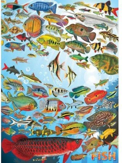Legpuzzel - 1000 - Vissen